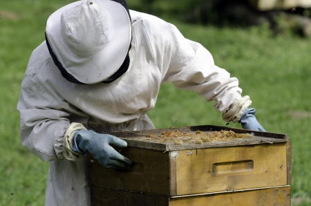 colmena: un apicultor en el trabajo