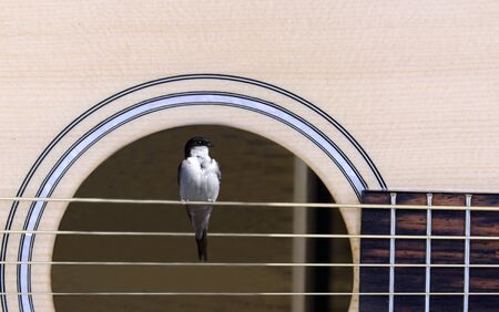 a swallow resting on the strings of a guitar