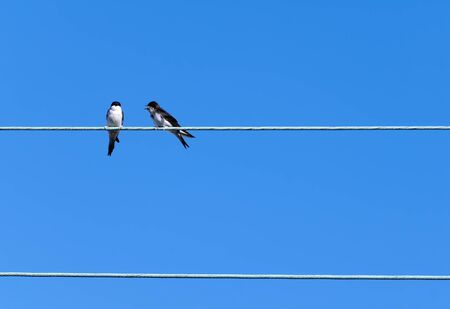 two swallows on an electric cable photo