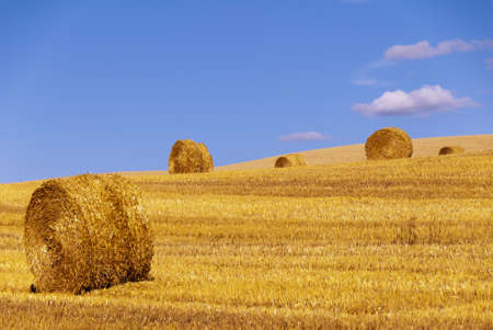 ourdoor: straw roll in a harvested field