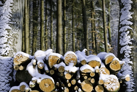 firewood stocked in the forest