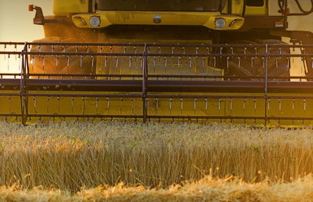 combine harvester: una cosechadora en el trabajo