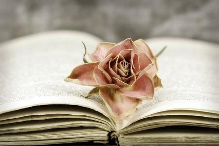 poezie: een vervaagde roos op een open boek Stockfoto