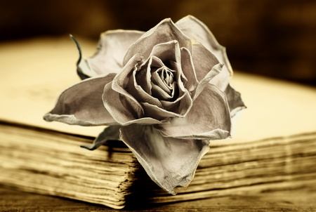 a faded rose on an old book Stock Photo - 13044387