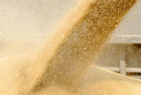 wheat grains loading