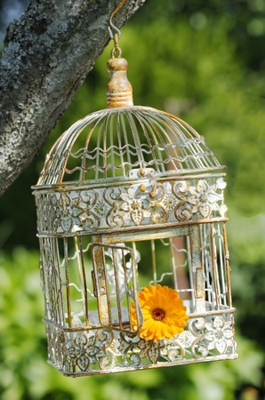 an open bird cage with a flower inside
