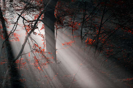 notional: red colors and subeams in the forest