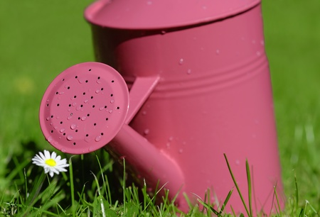 watering can in green grass