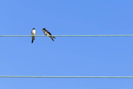 two swallows on an electrical cable Stock fotó