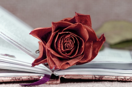 red faded rose on open book Stock Photo - 20162386