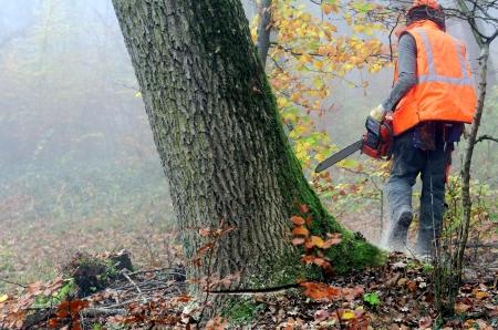 lumberjack: lumberjack at work