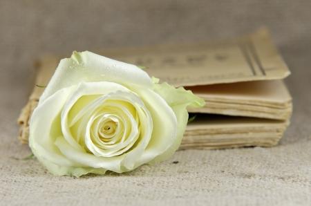a rose in closed book photo