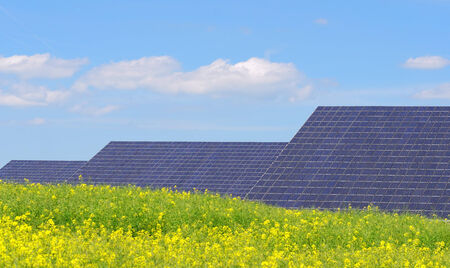 solar panels surrounded by rapeseed photo