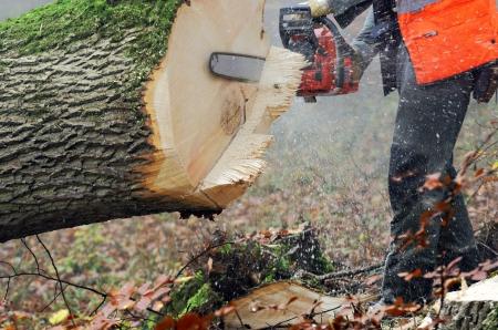 a lumberjack at work