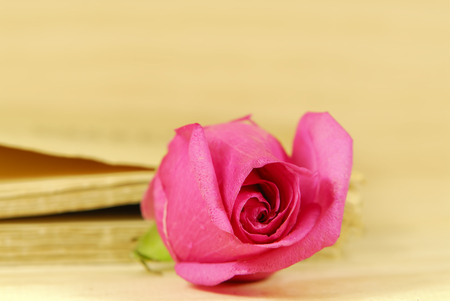beetwen: a pink rose beetwen book pages