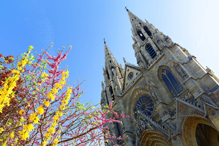 cathedrale: cathedrale in paris with colored flowers in the foreground