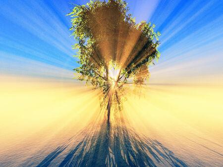 trough: sunlight effect trough the tree foliage