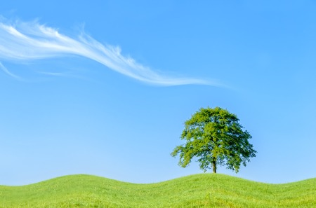 undulation: an isolated tree