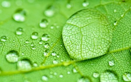 raindrop closeup on a green leaf