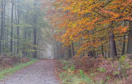 two walkers away on a forest road in autumn.