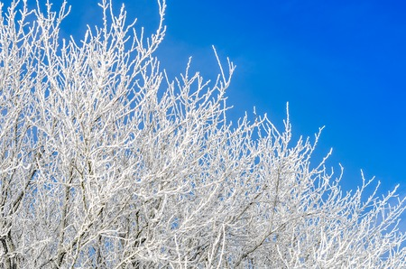 tree branches covered with snow and frost Stock fotó