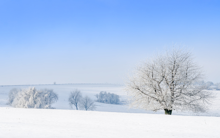 covered fields: fields covered with snow under blue sky Stock Photo