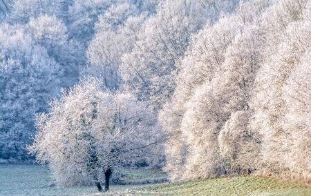 freezing: frosted tree by freezing fog Stock Photo