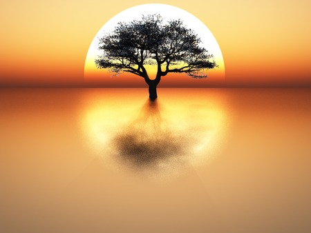 horizon reflection: tree on sunset background