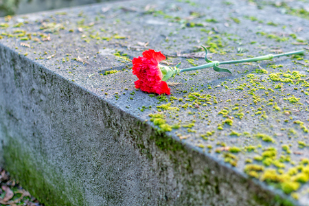 red  carnation: stone tomb covered by a red carnation flower