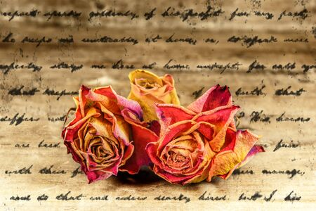 faded: faded roses  on letter texture