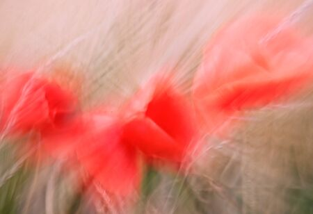 motion blur with poppies