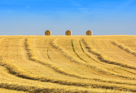 harvested: harvested field with straw rolls on the horizon Stock Photo