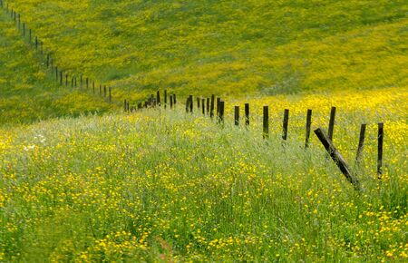 shared: a flower field shared by an old fence