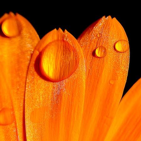 kropla deszczu: Płatek kwiat pokryte kropla deszczu Zdjęcie Seryjne