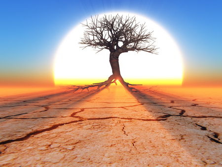 a dead tree in the desert against a backdrop of big sun