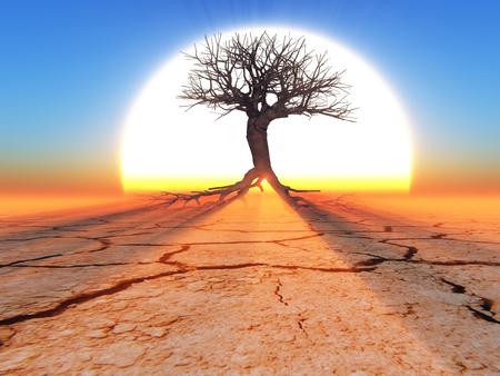 un arbre mort dans le désert dans un contexte de grand soleil