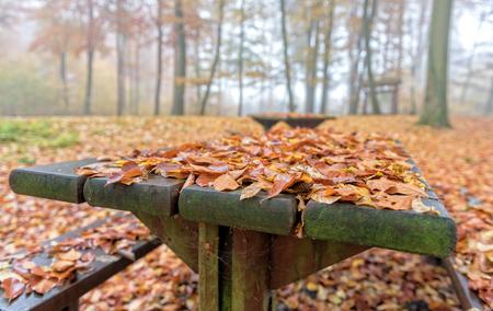 dode bladeren: een houten tafel in het bos bedekt met dode bladeren