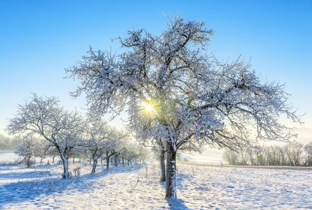 frozen meat: trees covered with frost in a snowy countryside Stock Photo