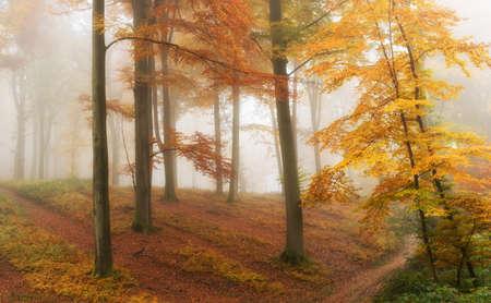 misty forest in fall season.