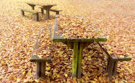 dode bladeren: houten banken en tafels bedekt met dode bladeren in een rustruimte Stockfoto