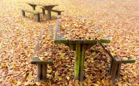 dode bladeren: wooden benches and tables covered with dead leaves in a rest area