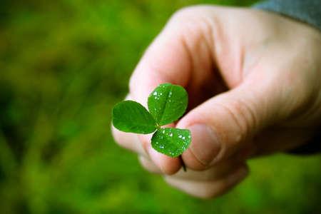 Hand of a man holding a clover leaf, an Irish symbol