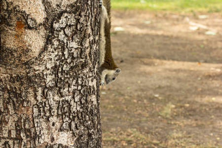 nibbling: Squirrel eating fruit on a tree at a park.