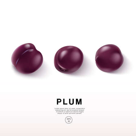 Realistic Plum on White Background : Vector Illustration