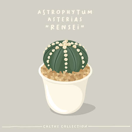 Cactus type collection : Cactus in white small pot isolated on beige background : Vector Illustration