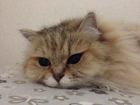 otganimalpets01: my lovely kitty