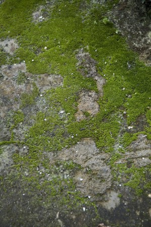 Green moss colored grunge on the floor