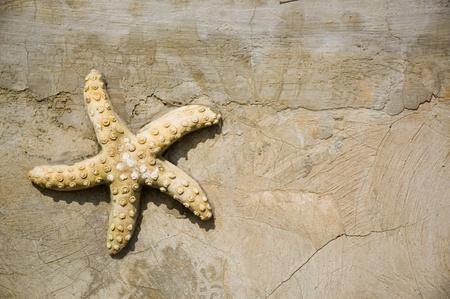 fish star: concepto de vacaciones con peces estrellas en la pared.