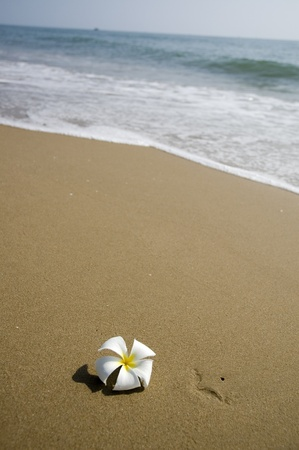tropical flower on the beach with sea background.