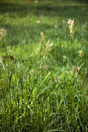 meadow on green nature background Stock Photo - 13623559